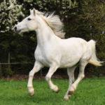 horse-06